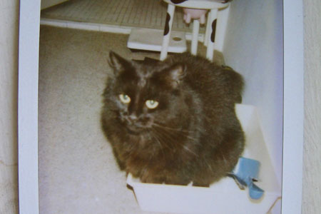 A polaroid type picture showing a cat in a litter tray with a cow themed stool in the background