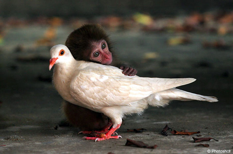 A photo of a small monkey hugging a large white bird.