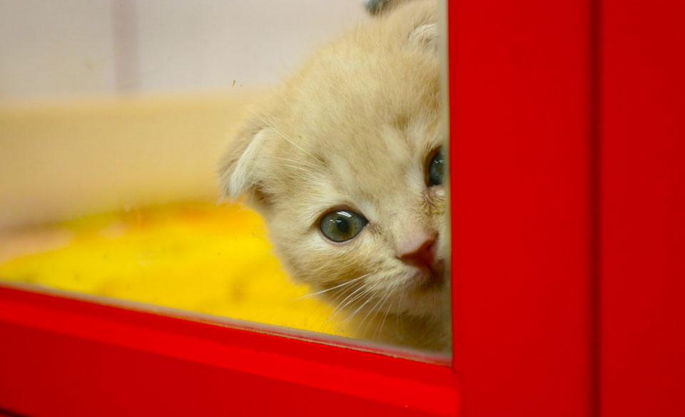 A photo of a small cute kitten looking scared from behind a red wooden door or window frame.