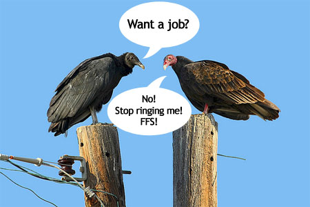 A picture of a vulture asking a turkey if he wants a job with the turkey shouting no and to stop ringing him ffs